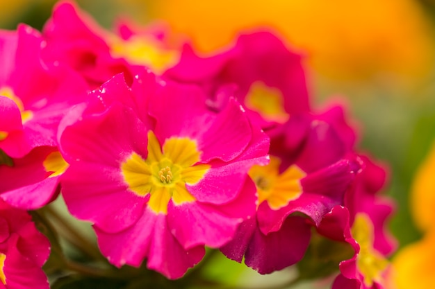 Pink flowers with copy space Free Photo