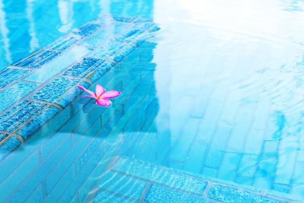 Pink frangipani in swimming pool with turquoise water Premium Photo