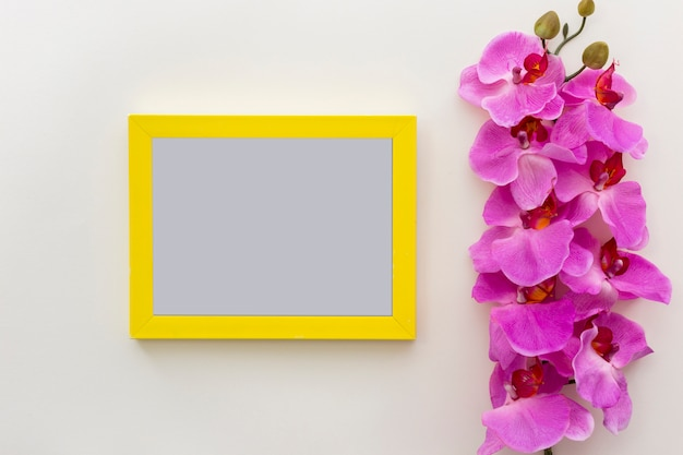 Pink fresh orchid flowers with empty blank photo frame on white surface Free Photo