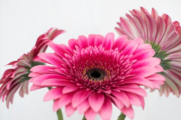 Awesome Assorted Gerberas