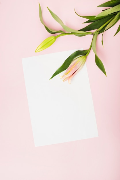 Pink lily buds on white paper over the pink background Free Photo