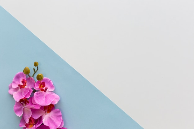 Pink orchid flowers arranged on corner of dual background Free Photo