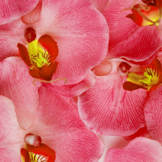 Pink orchid flowers background Free Photo