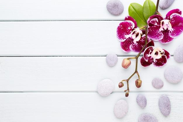 木の上のピンクの蘭。スパとウェルンズのシーン。 Premium写真