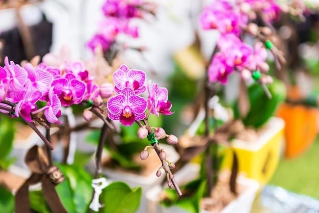 Pink orchids flower Premium Photo