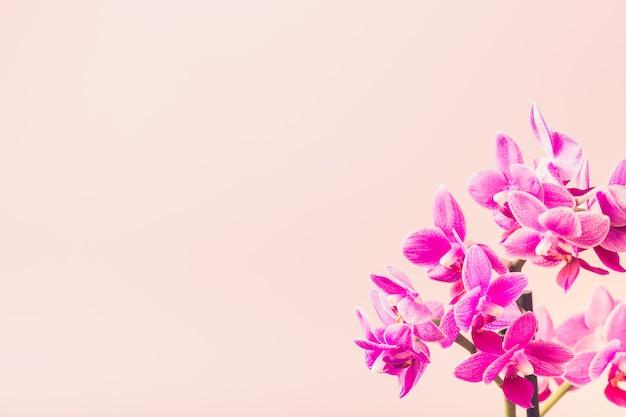 Pink phalaenopsis orchid flowers Premium Photo