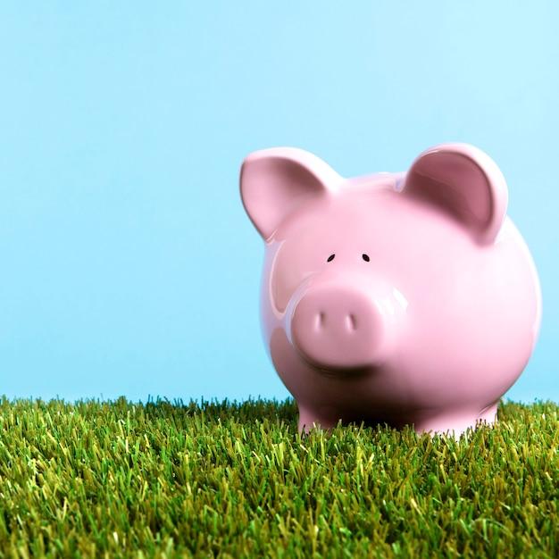 ピンクの貯金箱草青い空広場 無料写真