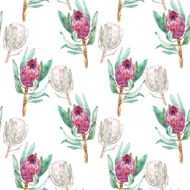 Pink protea flower watercolor illustration. seamless pattern design on a white background. Premium Photo