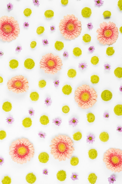 Pink; purple and green flower pattern on white background Free Photo