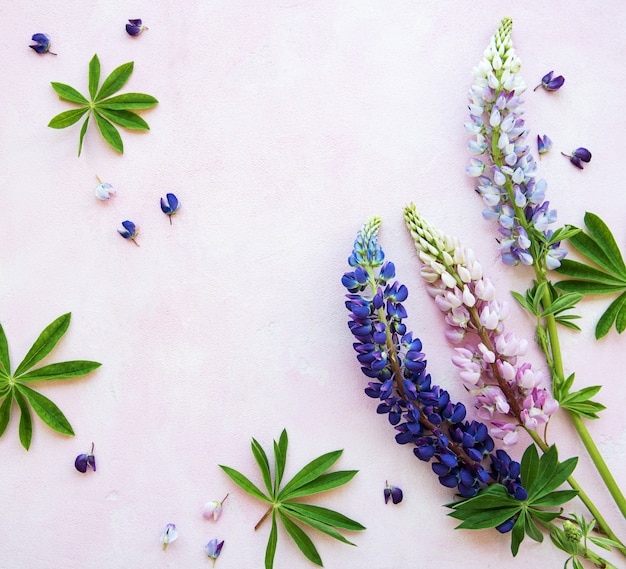 Pink and purple lupine flowers Premium Photo