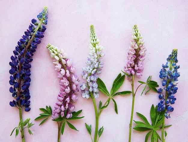 Pink and purple lupine flowers Premium Photo