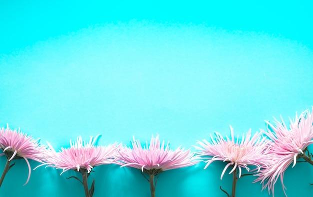 青色の背景にピンクの本物の美しい菊 無料写真