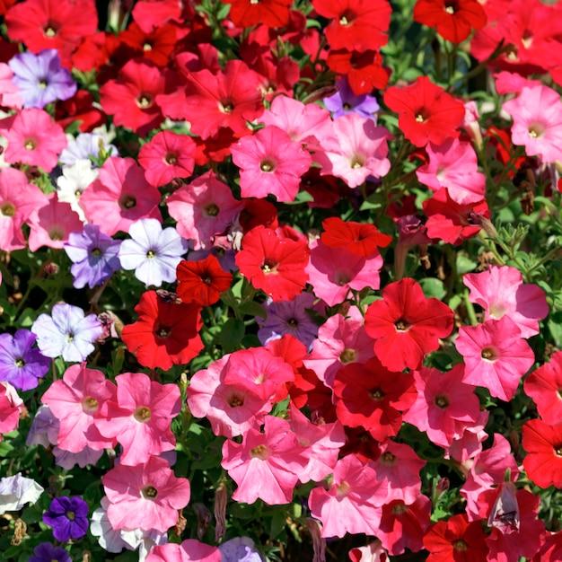 太陽の下で庭にピンク、赤、白、紫の花 無料写真