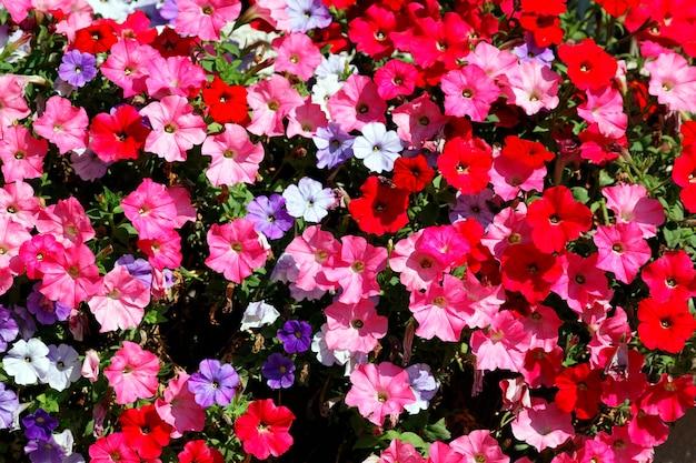 庭のピンク、赤、白、紫の花 無料写真