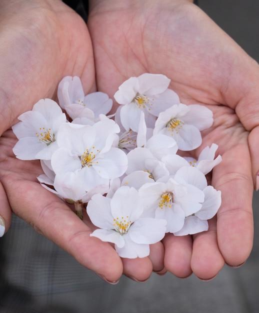 Pink sakura blossom in hand Premium Photo