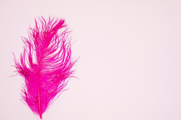 Pink single feather on colored background Free Photo