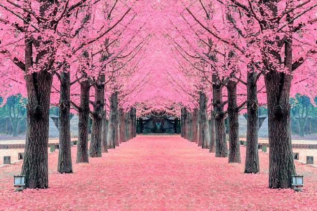 ピンクの木、韓国の南島 無料写真