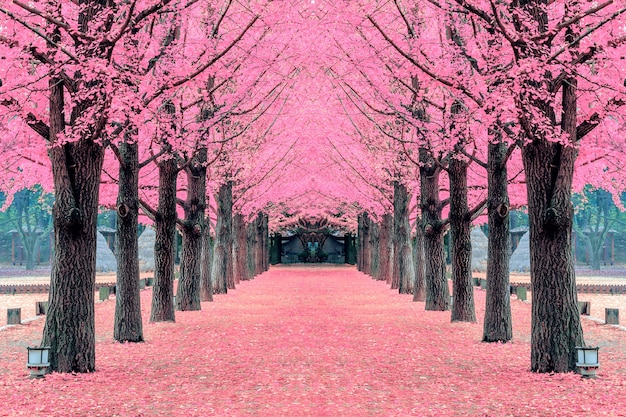Pink tree,nami island in korea Free Photo