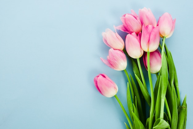Pink tulip flowers on blue table Free Photo