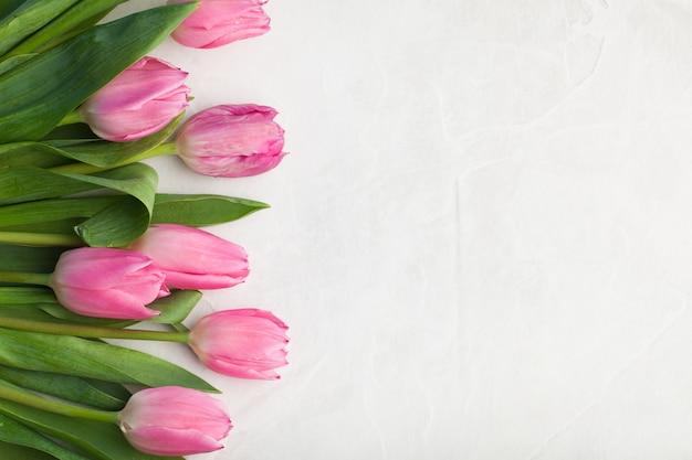 Pink tulip on white background. Premium Photo