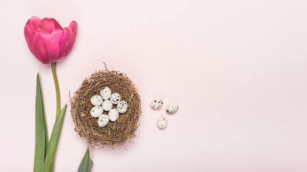 Pink tulip with quail eggs in nest Free Photo
