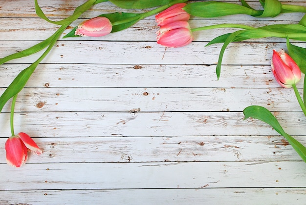 Pink tulips bunch on white wooden planks empty space for lettering, text, letters, inscription. Premium Photo