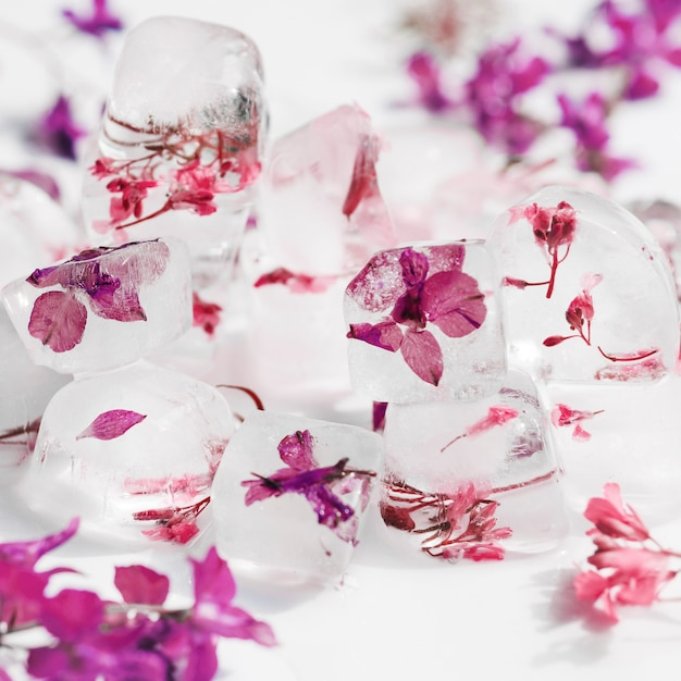 Pink and violet flowers in ice cubes Free Photo