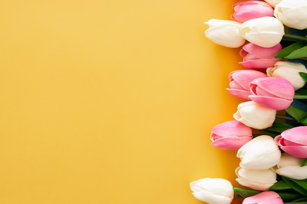 Pink and white tulips on yellow background Free Photo
