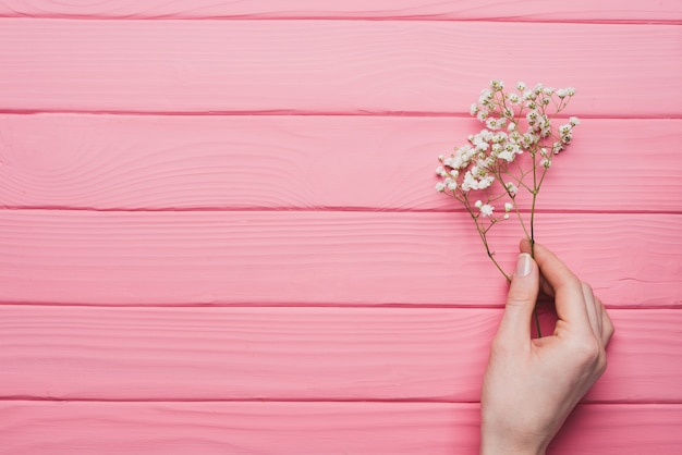 Pink wooden background with hand holding a twig Free Photo