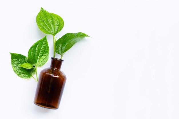 Листовой куст piper sarmentosum с изолированной бутылкой эфирного масла Premium Фотографии