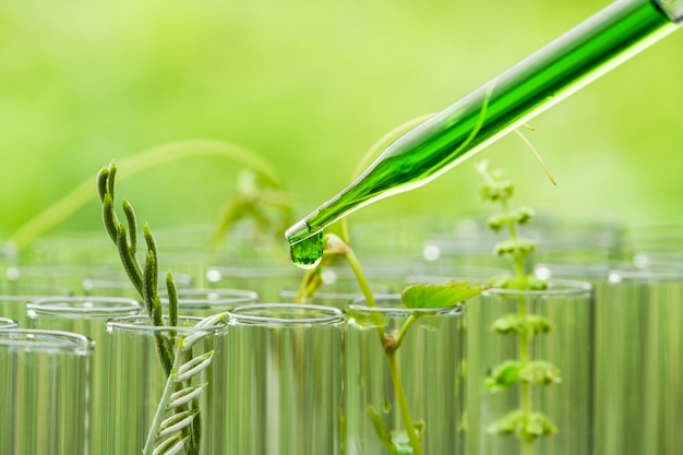 Pipette dropping green sample chemical  over young sample plant growing in test tube , biotechnology research concept Premium Photo