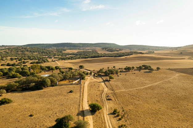 Plain and forest with road taken by drone Free Photo