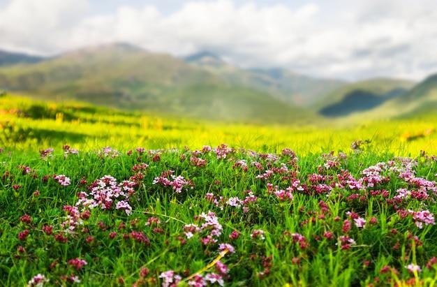 피레네 산맥의 고산 초원에서 식물 무료 사진