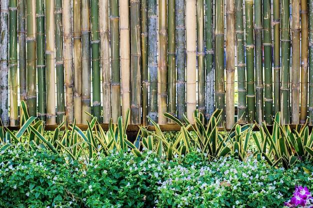 ornamental bamboo fence.htm plant at bamboo fence premium photo  plant at bamboo fence premium photo