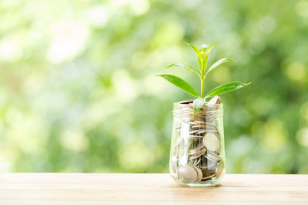 Plant growing from coins in the glass jar on blurred nature Free Photo