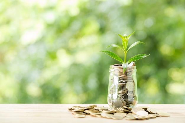 Pianta che cresce dalle monete nel barattolo di vetro sulla natura vaga Foto Gratuite