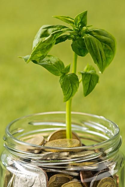 緑の芝生の上のお金のためのコインガラス瓶で育つ植物 無料写真