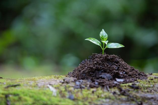 지상에서 자라는 식물 무료 사진