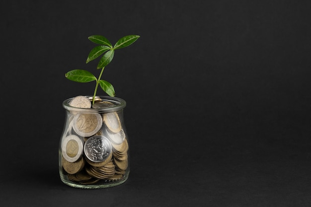 Plant growing out of jar of coins Premium Photo