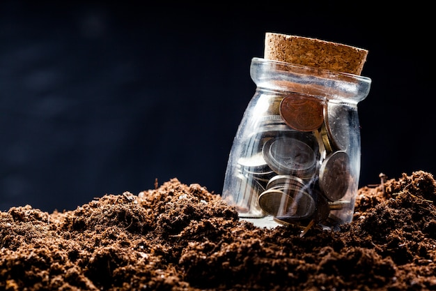 Plant growing in savings coins - investment and interest concept Premium Photo