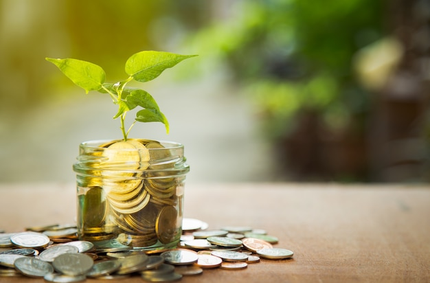 Plant growing in savings coins with green bokeh background Premium Photo