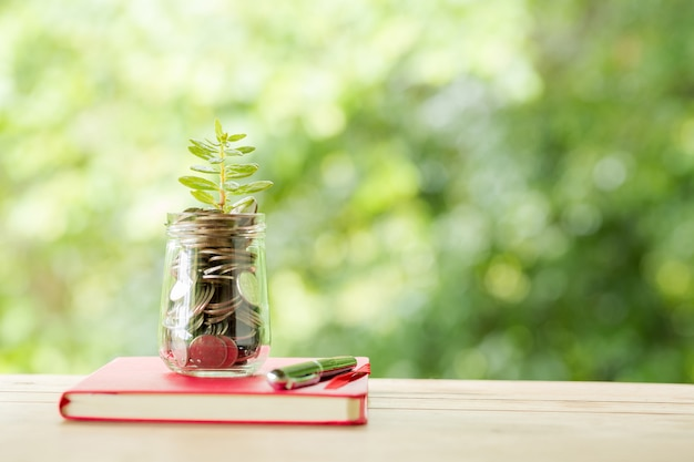 Plant growing in savings coins Free Photo