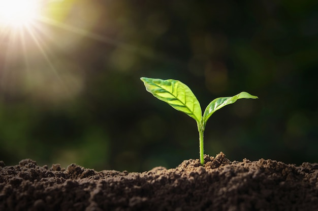 Plant growing on soil with sunshine. eco earth day concept Premium Photo