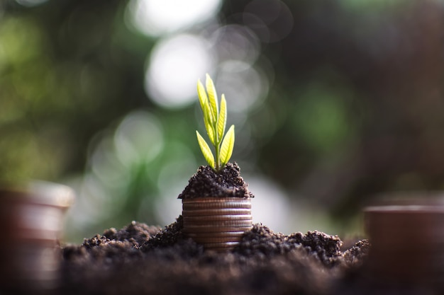 Plant growing with the coin money going to success. Premium Photo