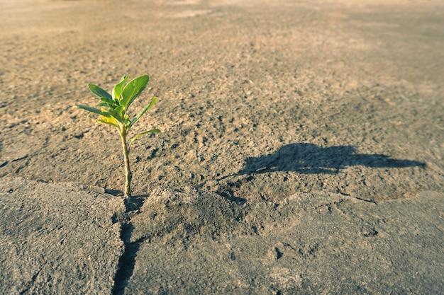 Рост растений через бетонную почву Premium Фотографии