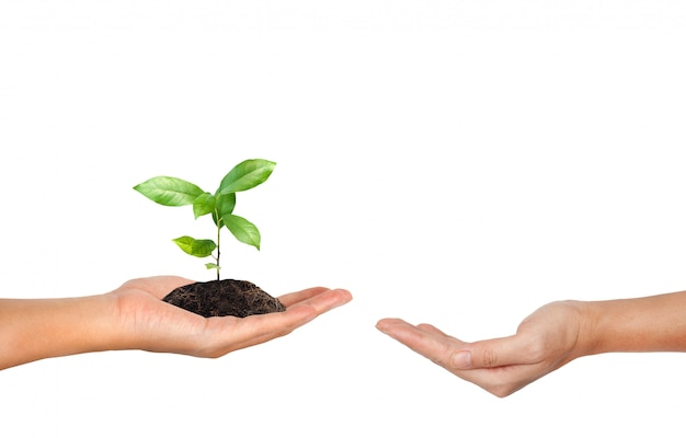 Plant in the hand isolated on white background Premium Photo