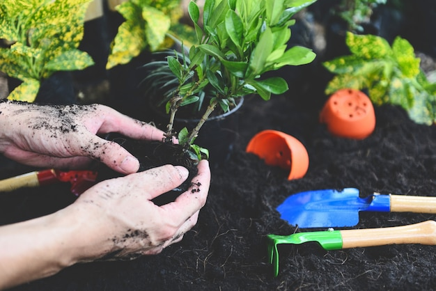 Plant in hand for planting in the garden Premium Photo