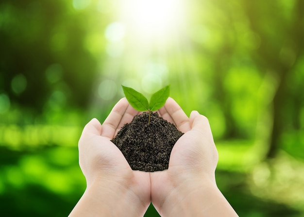 Plant in hands - grass background, environment concept Premium Photo
