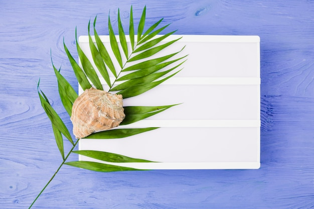Plant leaf near seashell and tablet on board Free Photo