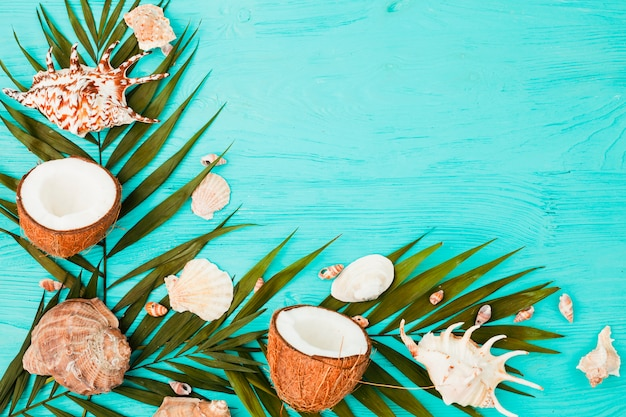 Plant leaves near coconuts and seashells on board Free Photo